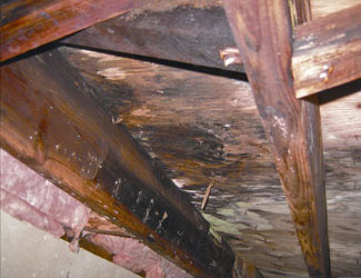mold and rot in a Madison crawl space