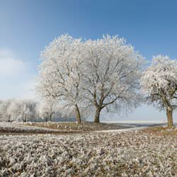 Frost covering trees and a grassy field in Cherry Valley