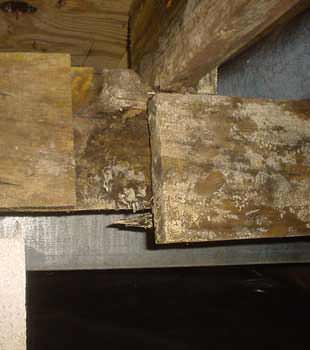 Extensive basement rot found in Rockford, IL by Badger Basement Systems