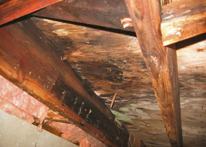 Extensive crawl space rot damage growing in Richland Center