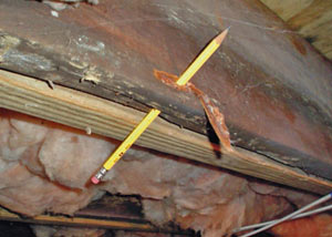 Destroyed crawl space structural wood in Fitchburg